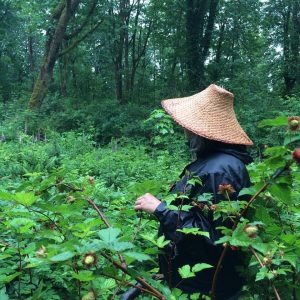 Interactive Medicine Walk with the Indigenous Plant Diva